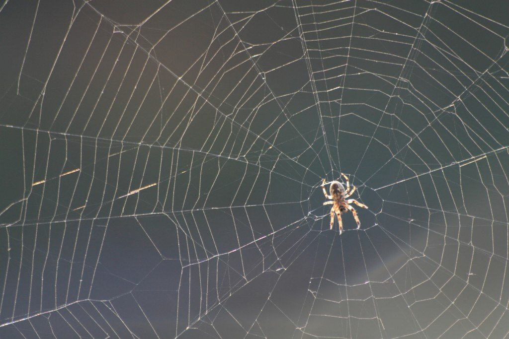 spiders have no need for web design software