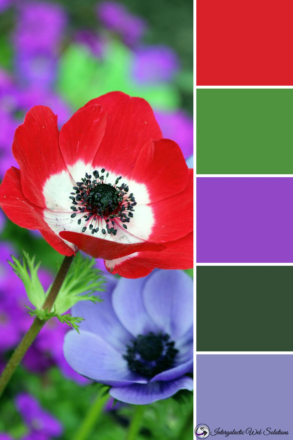 Red and Purple Anemones